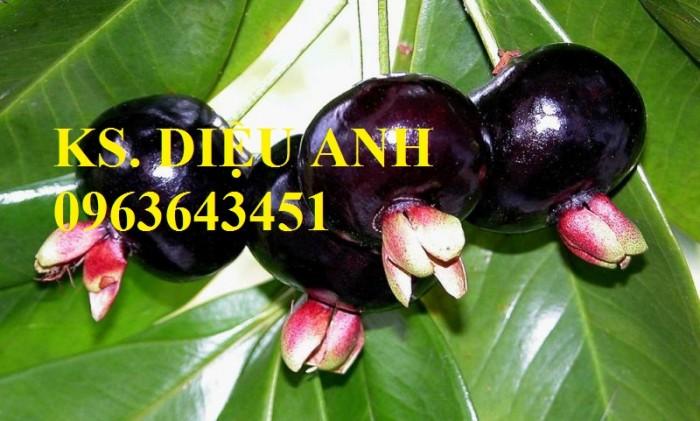 Cây giống cherry anh đào, cherry brazil, cây cherry nhiệt đới nhập khẩu bạn đã có chưa?4