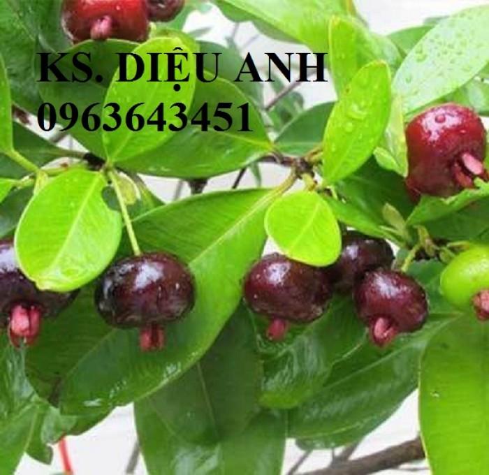 Cây giống cherry anh đào, cherry brazil, cây cherry nhiệt đới nhập khẩu bạn đã có chưa?5