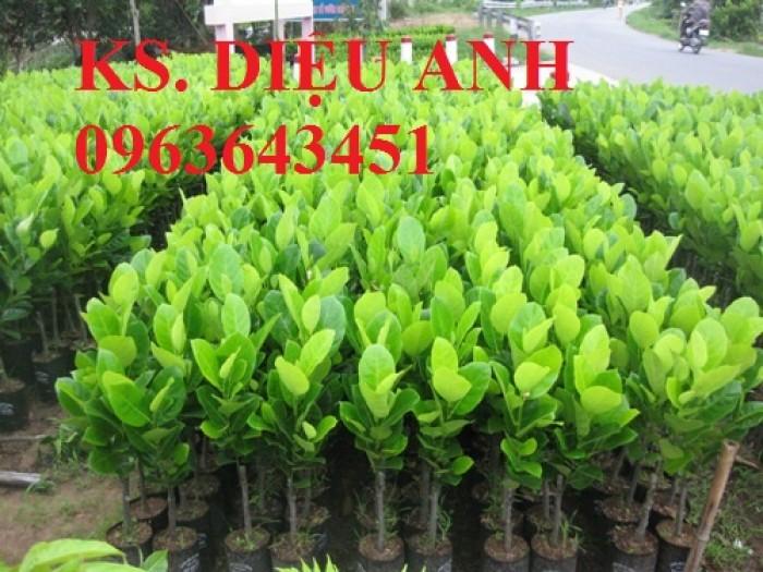 Trung tâm giống cây trồng CNC chuyên cung cấp cây giống mít ruột đỏ, mít múi đỏ, mít nghệ chuẩn, số lượng lớn6