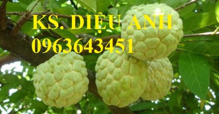 Chuyên cung cấp cây giống na Thái Lan, mãng cầu na Thái, na dai, na ta chuẩn giống, hỗ trợ kỹ thuật trồng6