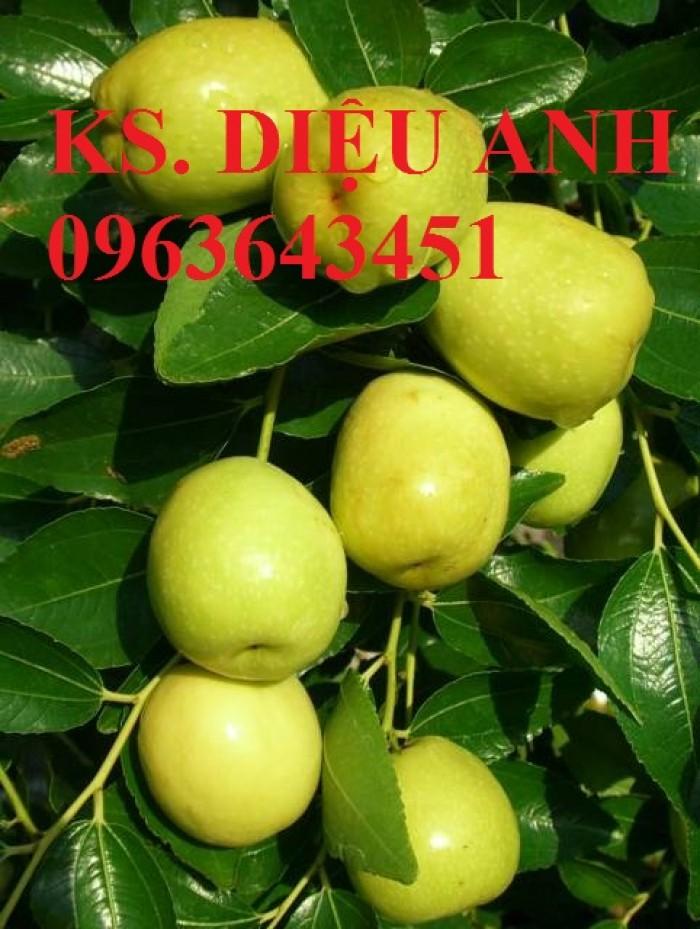 Mua cây giống táo đào vàng, cây giống táo chua, cây giống táo chuẩn F1 ở đâu?6