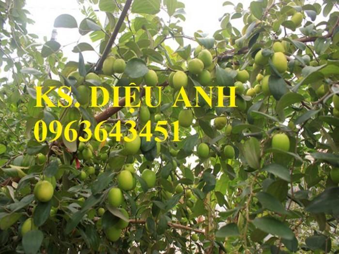 Mua cây giống táo đào vàng, cây giống táo chua, cây giống táo chuẩn F1 ở đâu?7