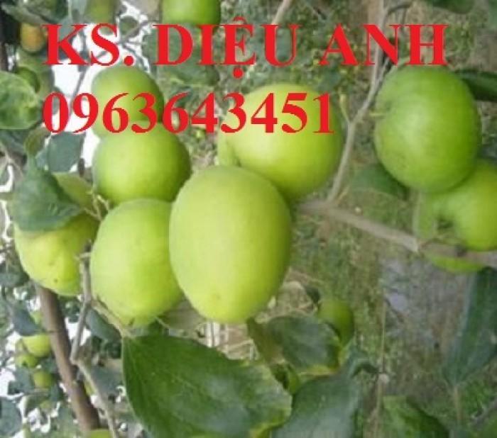 Mua cây giống táo đại, cây giống đại táo, cây giống táo quả to chuẩn F1, số lượng lớn ở đâu?2
