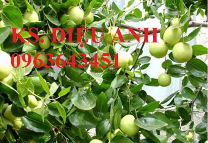 Mua cây giống táo đại, cây giống đại táo, cây giống táo quả to chuẩn F1, số lượng lớn ở đâu?7
