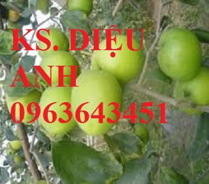 Mua cây giống táo đại, cây giống đại táo, cây giống táo quả to chuẩn F1, số lượng lớn ở đâu?9