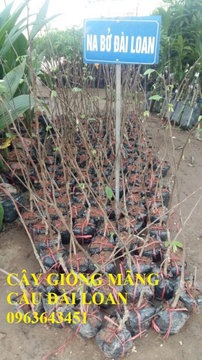 Mua cây giống na bở Đài Loan, mãng cầu Đài Loan, mãng cầu Đài Loan, mãng cầu bở Đài Loan5