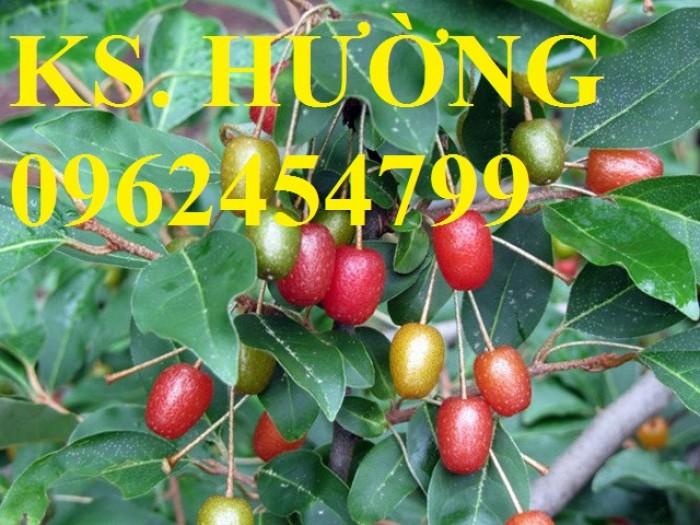 Cung cấp cây giống nhót mỹ, cây nhót tây (nhót ngọt cao sản), chuẩn giống nhập khẩu, giao hàng toàn quốc4