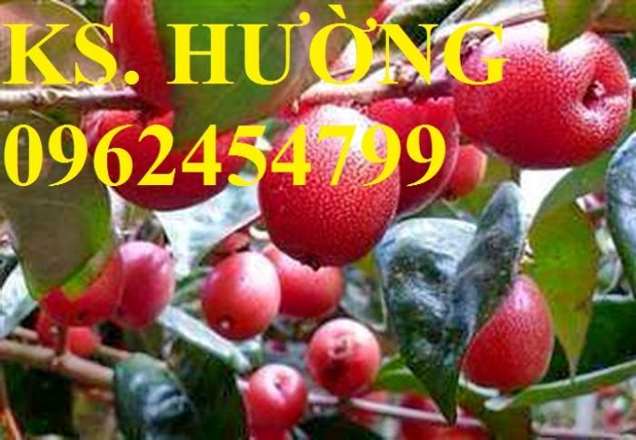 Cung cấp cây giống nhót mỹ, cây nhót tây (nhót ngọt cao sản), chuẩn giống nhập khẩu, giao hàng toàn quốc5