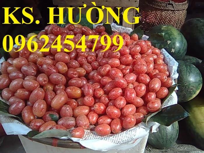 Cung cấp cây giống nhót mỹ, cây nhót tây (nhót ngọt cao sản), chuẩn giống nhập khẩu, giao hàng toàn quốc7