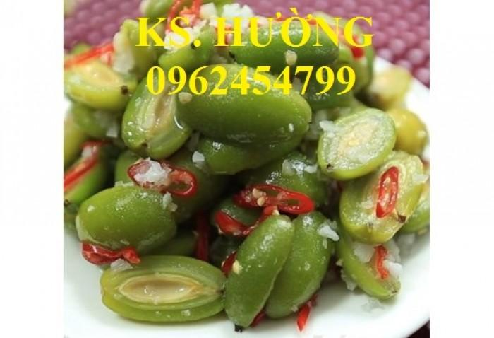 Cung cấp cây giống nhót mỹ, cây nhót tây (nhót ngọt cao sản), chuẩn giống nhập khẩu, giao hàng toàn quốc9