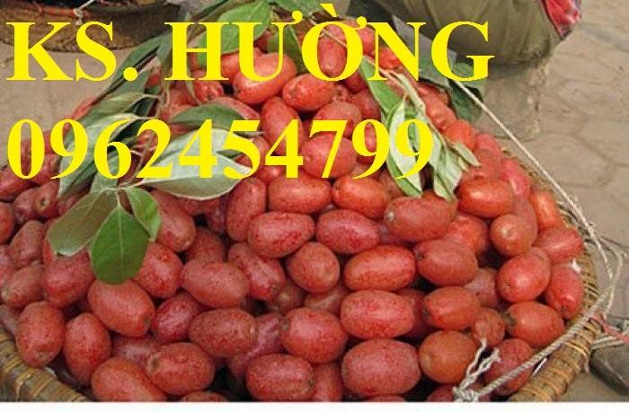 Cung cấp cây giống nhót mỹ, cây nhót tây (nhót ngọt cao sản), chuẩn giống nhập khẩu, giao hàng toàn quốc10