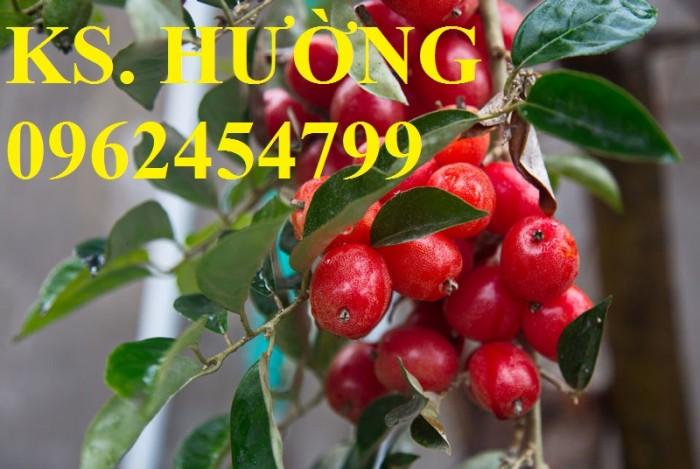 Cung cấp cây giống nhót mỹ, cây nhót tây (nhót ngọt cao sản), chuẩn giống nhập khẩu, giao hàng toàn quốc12
