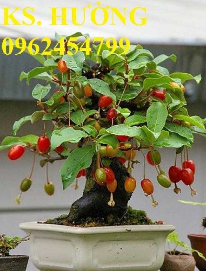 Cung cấp cây giống nhót mỹ, cây nhót tây (nhót ngọt cao sản), chuẩn giống nhập khẩu, giao hàng toàn quốc15