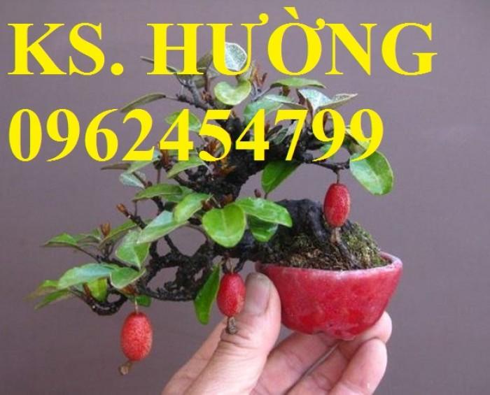 Cung cấp cây giống nhót mỹ, cây nhót tây (nhót ngọt cao sản), chuẩn giống nhập khẩu, giao hàng toàn quốc14