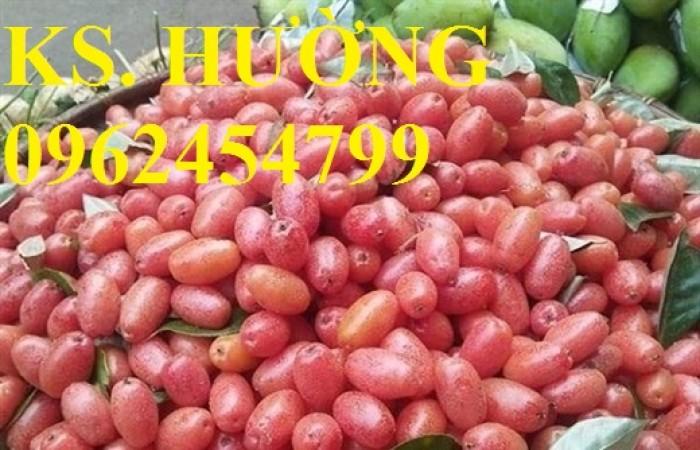 Cung cấp cây giống nhót mỹ, cây nhót tây (nhót ngọt cao sản), chuẩn giống nhập khẩu, giao hàng toàn quốc19