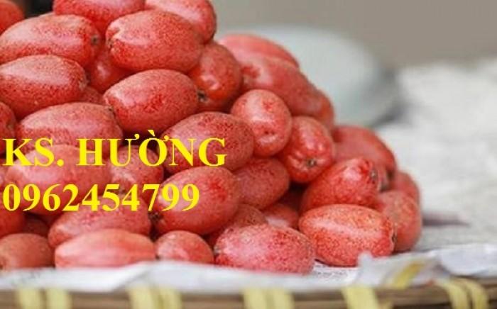 Cung cấp cây giống nhót mỹ, cây nhót tây (nhót ngọt cao sản), chuẩn giống nhập khẩu, giao hàng toàn quốc20