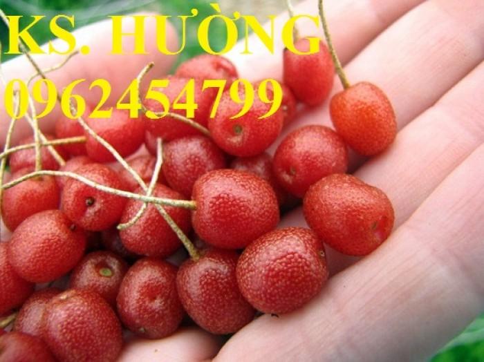 Cung cấp cây giống nhót mỹ, cây nhót tây (nhót ngọt cao sản), chuẩn giống nhập khẩu, giao hàng toàn quốc22