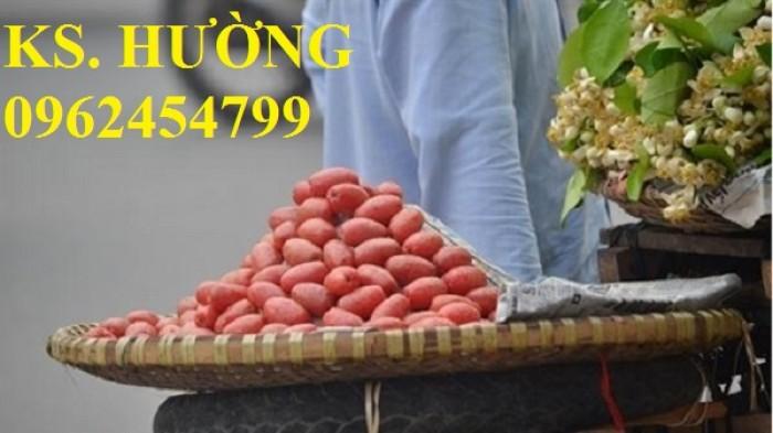 Cung cấp cây giống nhót mỹ, cây nhót tây (nhót ngọt cao sản), chuẩn giống nhập khẩu, giao hàng toàn quốc23
