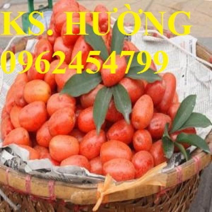 Cung cấp cây giống nhót mỹ, cây nhót tây (nhót ngọt cao sản), chuẩn giống nhập khẩu, giao hàng toàn quốc25