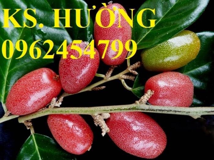 Cung cấp cây giống nhót mỹ, cây nhót tây (nhót ngọt cao sản), chuẩn giống nhập khẩu, giao hàng toàn quốc26