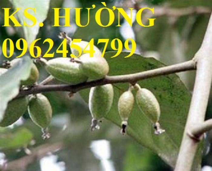 Cung cấp cây giống nhót mỹ, cây nhót tây (nhót ngọt cao sản), chuẩn giống nhập khẩu, giao hàng toàn quốc27