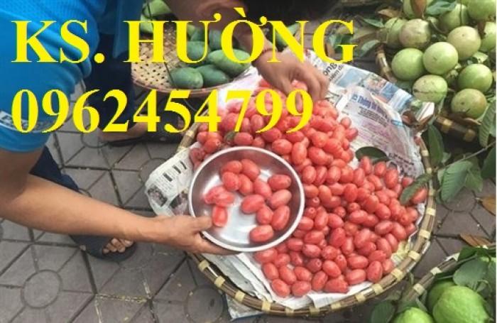 Cung cấp cây giống nhót mỹ, cây nhót tây (nhót ngọt cao sản), chuẩn giống nhập khẩu, giao hàng toàn quốc28