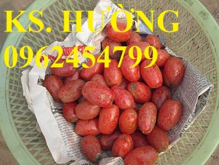 Cung cấp cây giống nhót mỹ, cây nhót tây (nhót ngọt cao sản), chuẩn giống nhập khẩu, giao hàng toàn quốc29