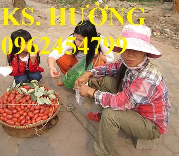 Cung cấp cây giống nhót mỹ, cây nhót tây (nhót ngọt cao sản), chuẩn giống nhập khẩu, giao hàng toàn quốc30