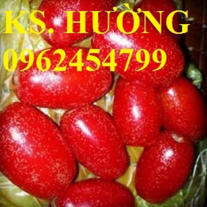 Cung cấp cây giống nhót mỹ, cây nhót tây (nhót ngọt cao sản), chuẩn giống nhập khẩu, giao hàng toàn quốc32