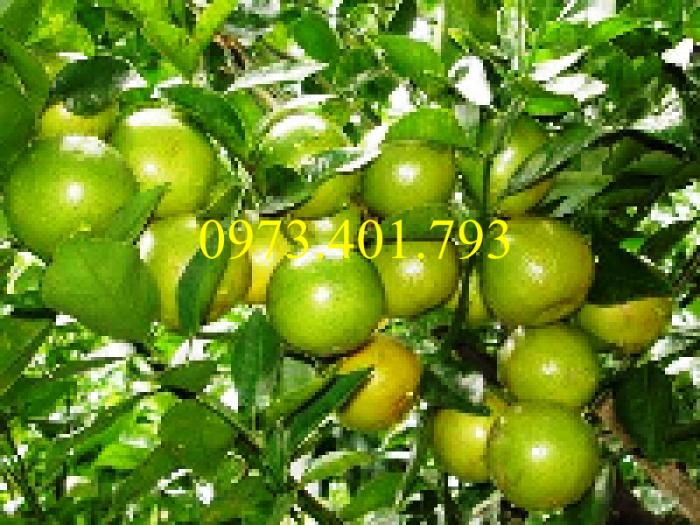 Các loại cây giống cam1