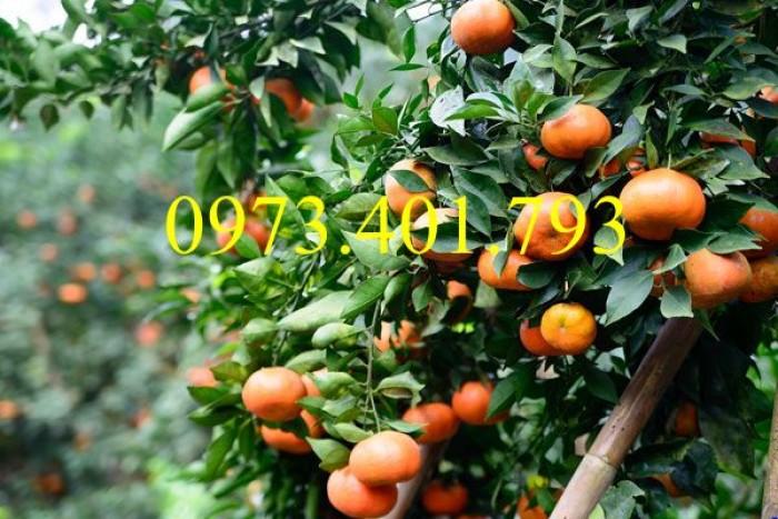 Các loại cây giống cam4