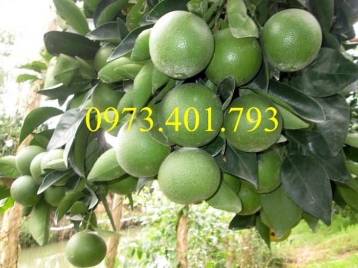 Các loại cây giống cam6