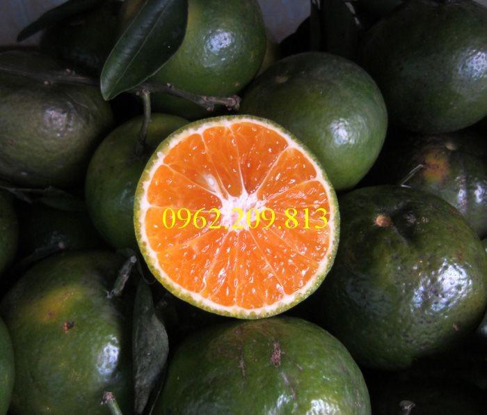Các loại cây giống cam7