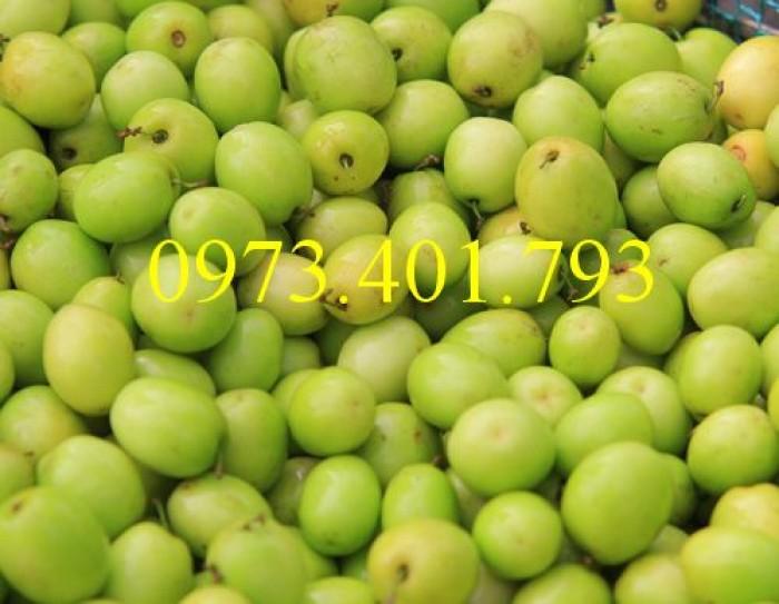 Các loại cây giống táo chất lượng2