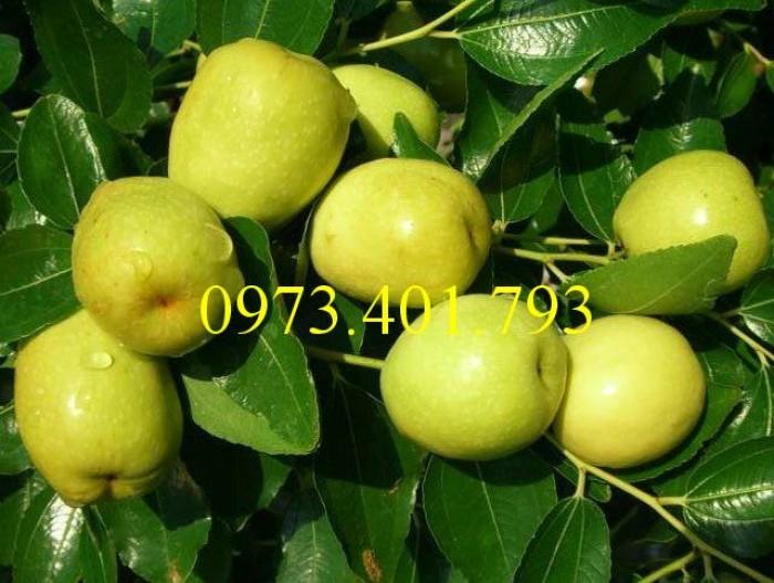 Các loại cây giống táo chất lượng3