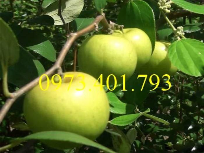 Các loại cây giống táo chất lượng4