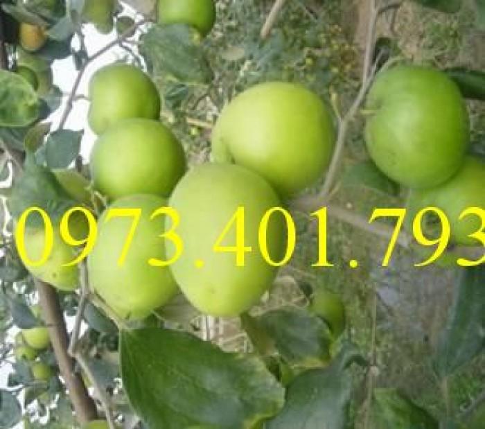 Các loại cây giống táo chất lượng6