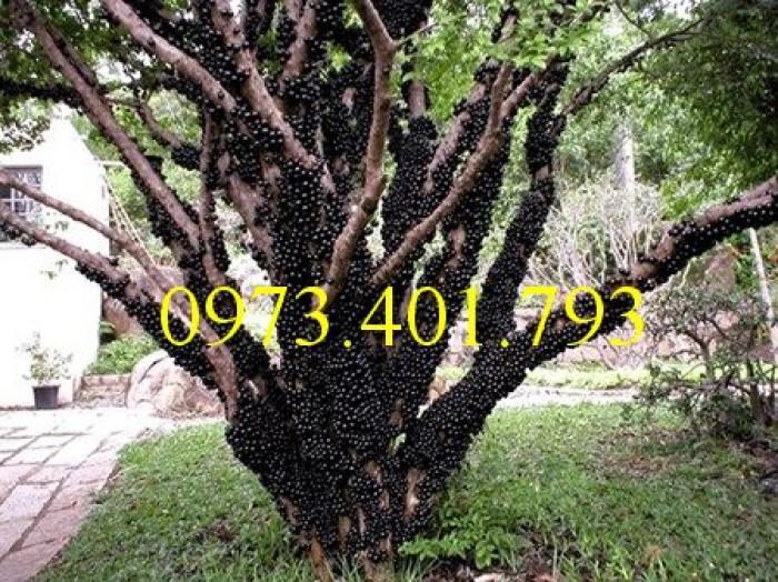 Các loại cây giống nho3
