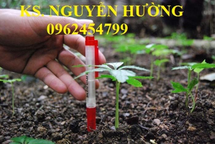 Cung cấp hạt giống sâm ngọc linh, cam kết chuẩn giống, giao hàng toàn quốc24