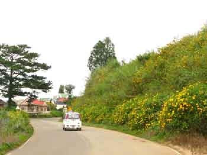 Đất diện tích rộng gần sân bay Cam Ly Đà Lạt – Bất Động Sản Liên Minh