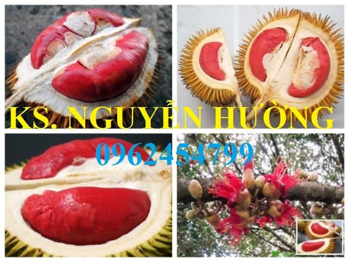 Cung cấp cây giống sầu riêng ruột đỏ, chuẩn giống nhập khẩu, giao hàng toàn quốc3