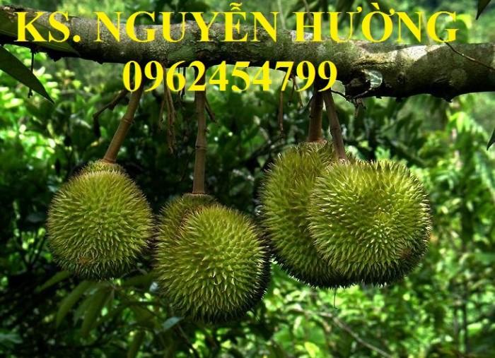 Cung cấp cây giống sầu riêng ruột đỏ, chuẩn giống nhập khẩu, giao hàng toàn quốc4