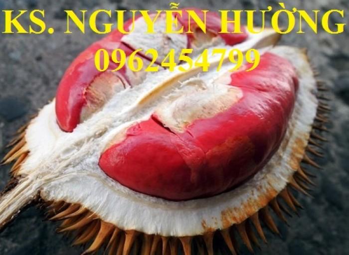 Cung cấp cây giống sầu riêng ruột đỏ, chuẩn giống nhập khẩu, giao hàng toàn quốc5