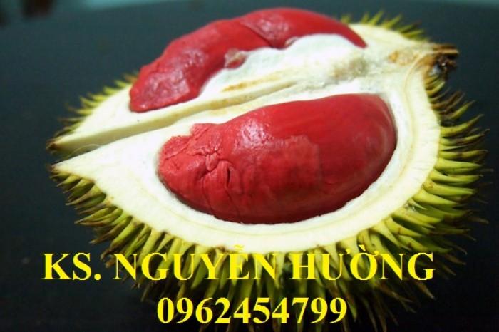 Cung cấp cây giống sầu riêng ruột đỏ, chuẩn giống nhập khẩu, giao hàng toàn quốc6