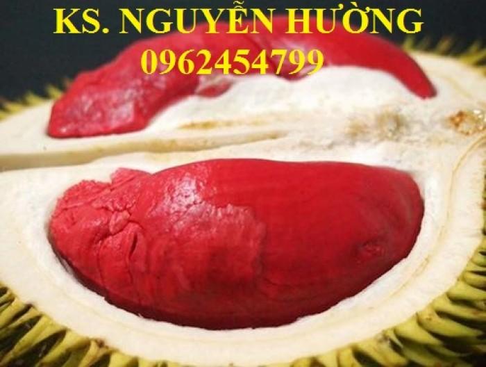 Cung cấp cây giống sầu riêng ruột đỏ, chuẩn giống nhập khẩu, giao hàng toàn quốc12