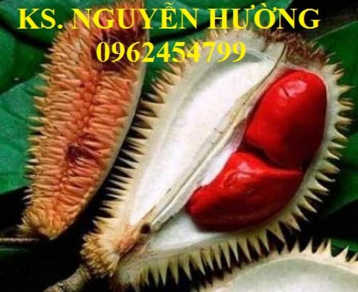 Cung cấp cây giống sầu riêng ruột đỏ, chuẩn giống nhập khẩu, giao hàng toàn quốc13