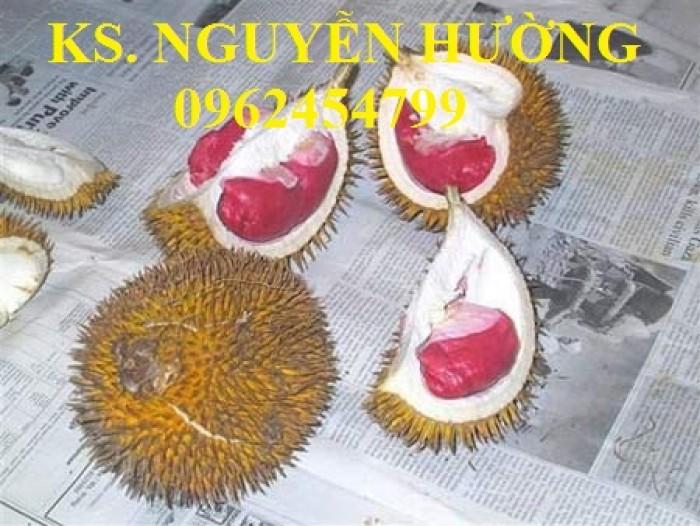Cung cấp cây giống sầu riêng ruột đỏ, chuẩn giống nhập khẩu, giao hàng toàn quốc14