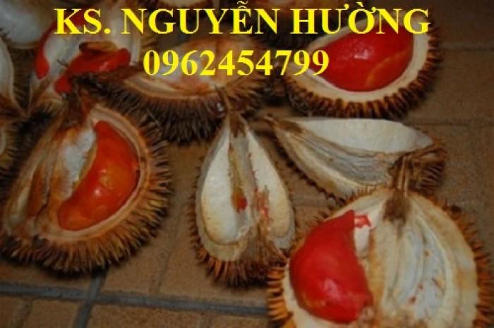 Cung cấp cây giống sầu riêng ruột đỏ, chuẩn giống nhập khẩu, giao hàng toàn quốc15