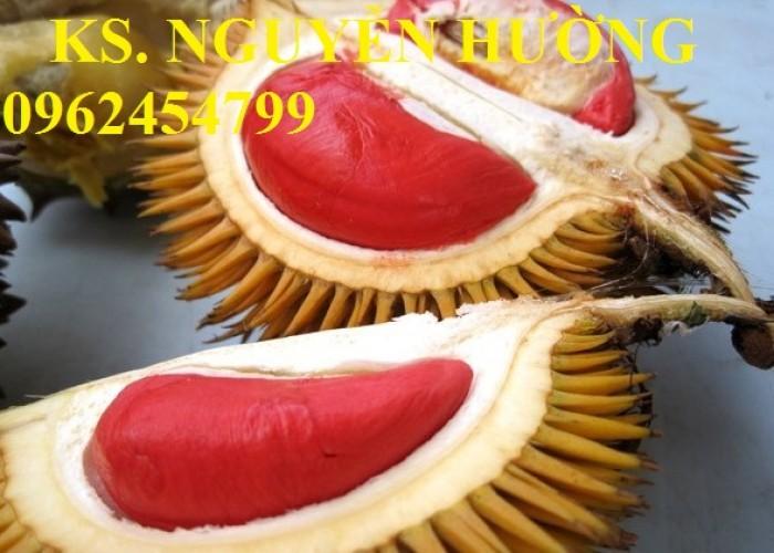 Cung cấp cây giống sầu riêng ruột đỏ, chuẩn giống nhập khẩu, giao hàng toàn quốc18