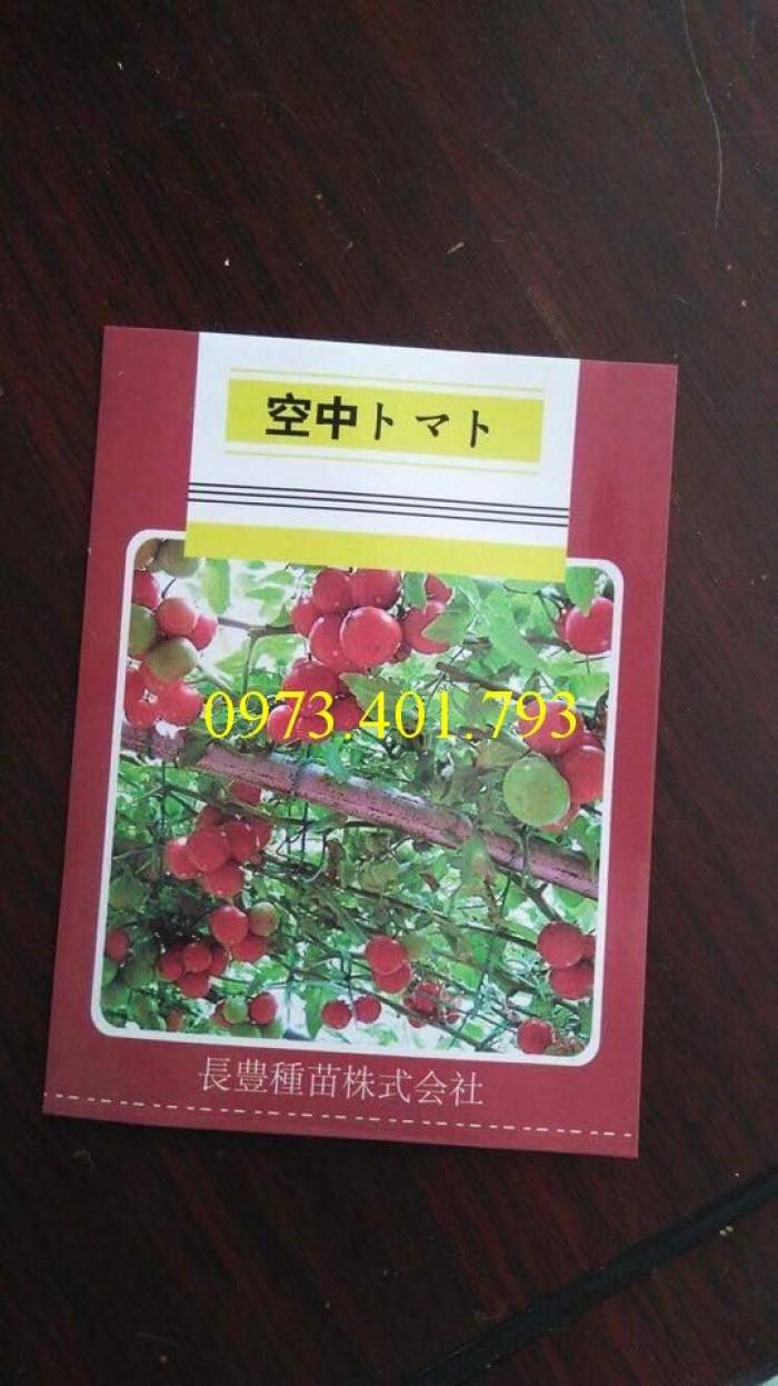 Hạt giống cà chua bạch tuộc uy tín2